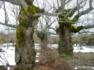 Acebos y Enebral de Prádena; rey de patones velas pedraza parque natural de grazalema